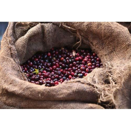 Uganda Aa West Nile - Erussi Rfa Certified 100% Arabica Custom Roasted Coffee Beans (Medium Roast (Full City ), 2.5 Pounds Whole Beans)