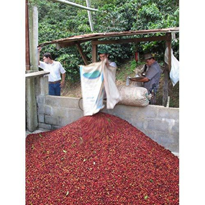 Colombian Medellin From The Santa Barbara Estate Excelso E/P Coffee Beans, 15/16 (Medium Roast (Full City ), 2 Pounds Whole Beans)